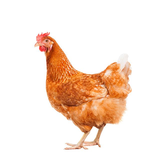 鶏軟骨抽出物85(コンドロイチン塩酸塩)